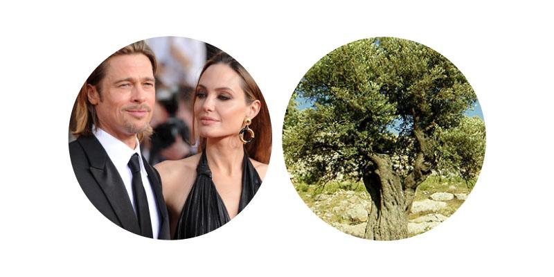 Angelina Jolie | Bradd Pitt - Valentines Gift
