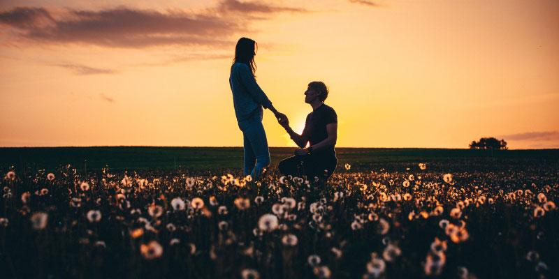 flower meadow proposal